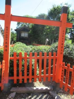 我が国最古の茶園、と称されている日吉茶園でございます。