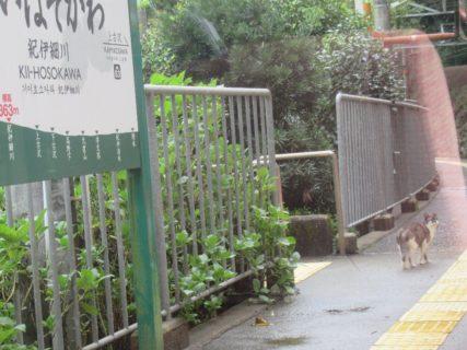 紀伊細川駅は、和歌山県伊都郡高野町にある南海電鉄高野線の駅。