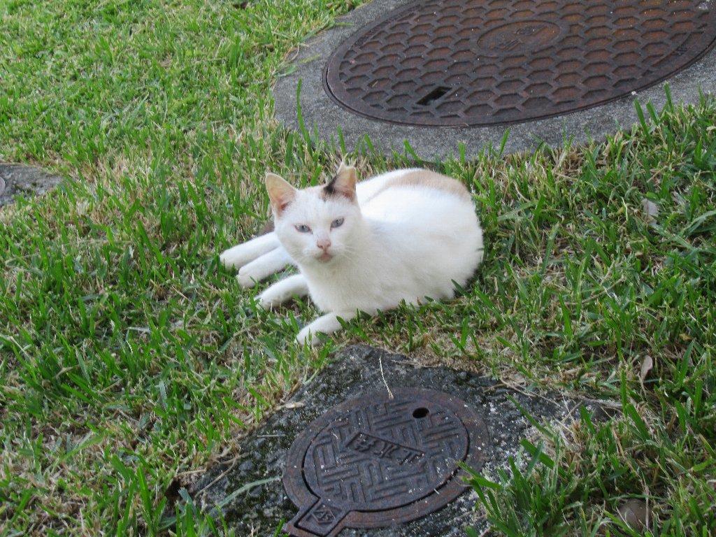 この猫ちゃん、識名園の園長さんか何かなんですかね?