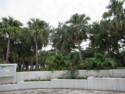 青島亜熱帯植物園の愛称は宮交ボタニックガーデン青島。
