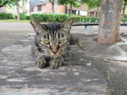 SL広場の猫先生いわく、たぬき像の場所が元々の駅跡だそうで。