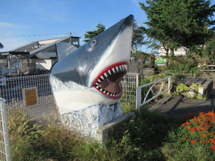 鮫駅のサメ。