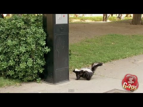 Skunk Parking Prank